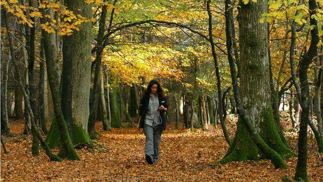 Woman walking through wood