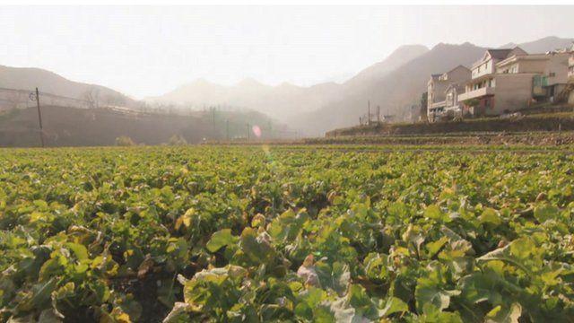 Field in Xinchao