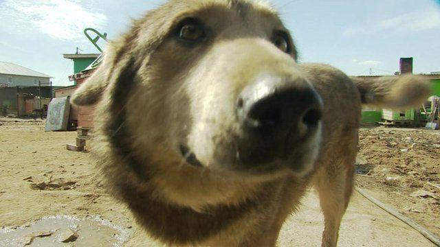 A dog in an animal shelter in Kazan