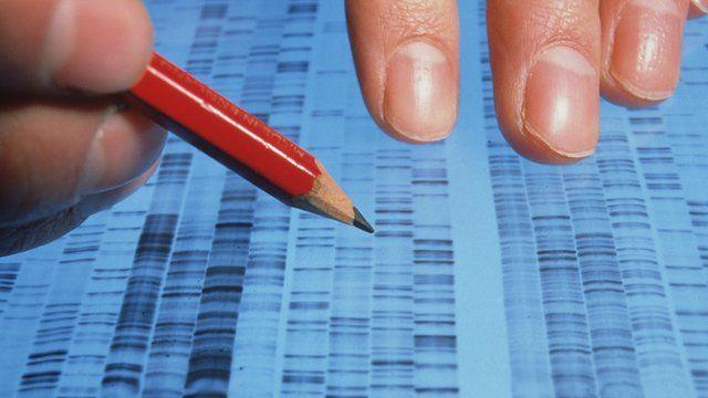 Scientist examining DNA sequencing autoradiogram on a light box