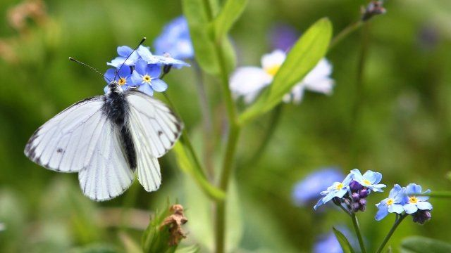 A butterfly sits on a flower