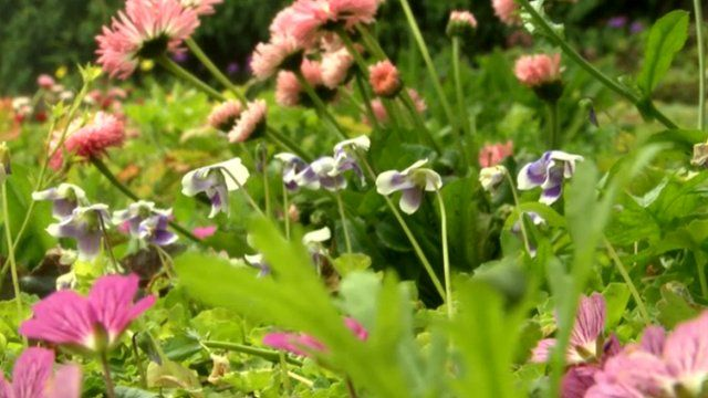 Grass-free floral lawn