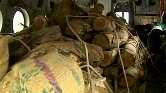 Wood is being distributed for cremations
