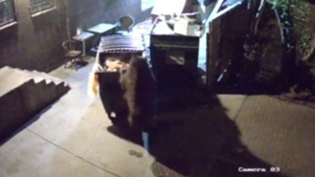 bear stealing a bin