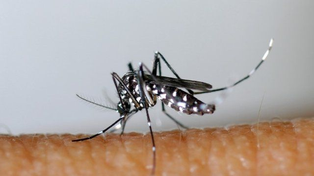 This handout picture released on March 26, 2013 by EID Mediterranee shows an Aedes albopictus or Asian Tiger Mosquito.