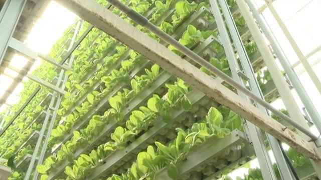 Singapore vertical farm