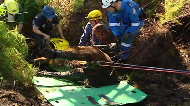 Rescuers freeing Kiparra the horse after she became trapped in mud