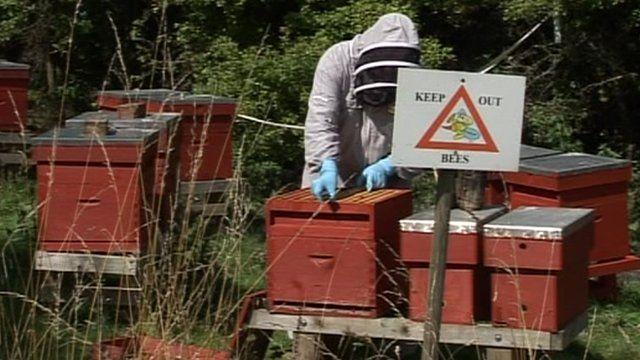 Bee farmer Chris Wilkes