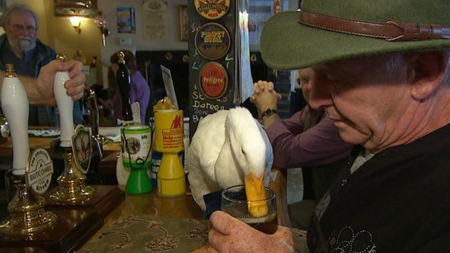 Star enjoys a sip of beer