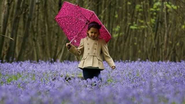 A child amongst bluebells