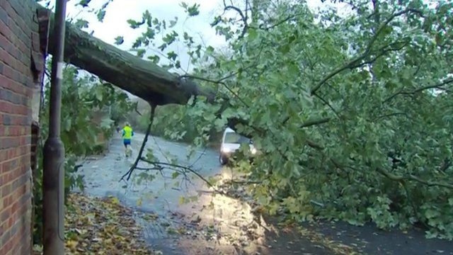 A fallen tree blocks traffic