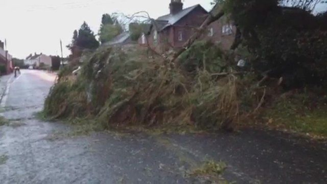 Trees have been brought down in Wiltshire