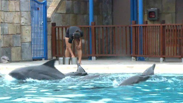 Dolphins at Singapore's Marine Life Park