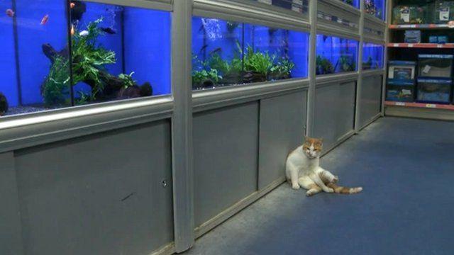 Graham the cat near the fish tanks