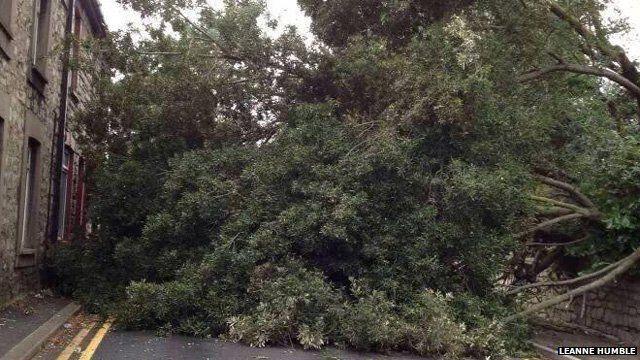 Fallen tree in Bridgend