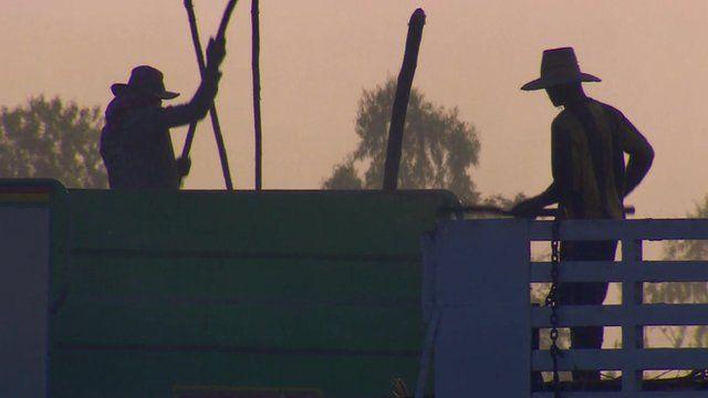 Farm workers, in silhouette
