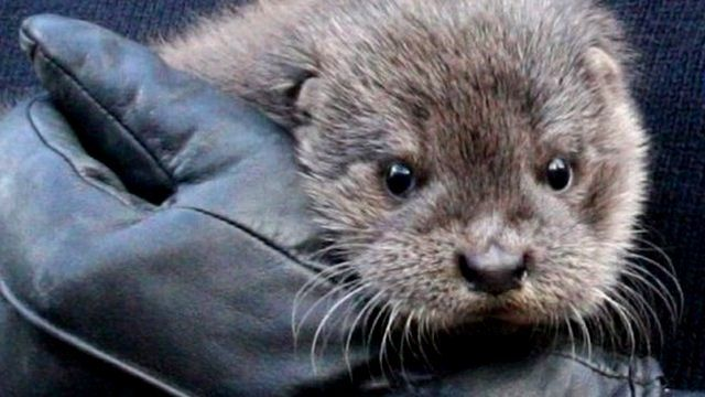 Otter rescued after severe weather