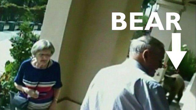 A bear caught on CCTV