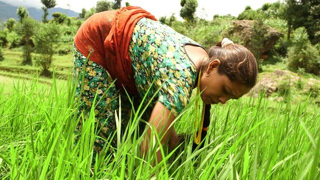 Pregnant woman working in a field in Nepal