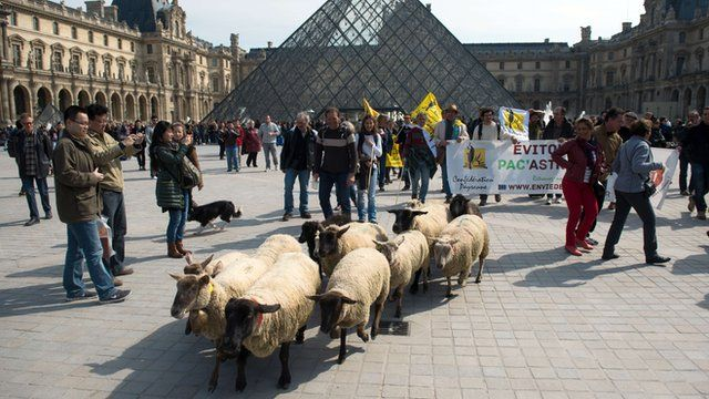 Sheep at the Louvre museum in Paris