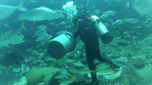 Aquarist Amanda Leong