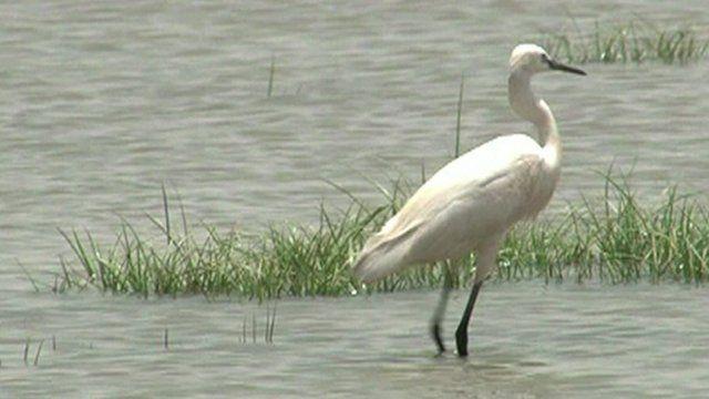 Bird at the Al-Magran bird haven in Khartoum