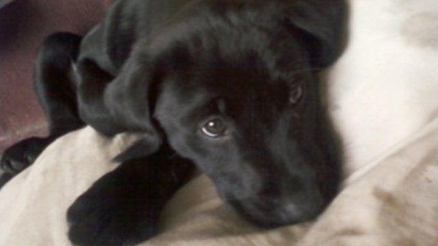 Jack the agoraphobic dog