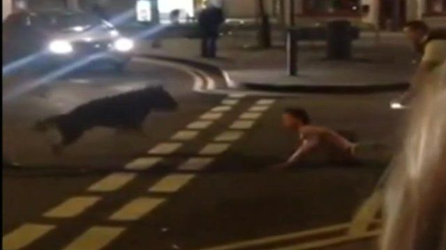 Mobile phone footage of police dog biting a man
