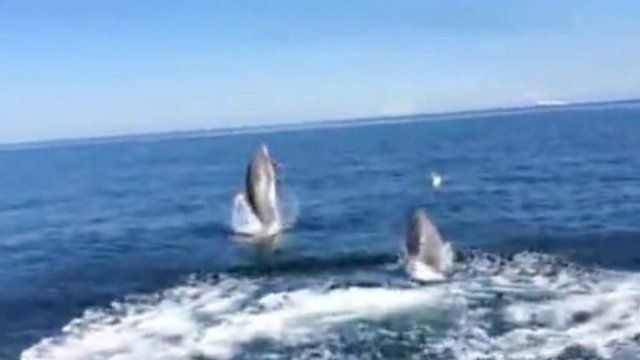 Dolphins spotted off Kinmel Bay