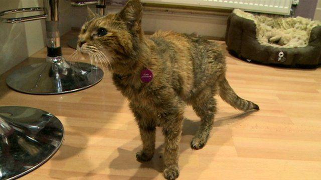 Poppy the world's oldest cat