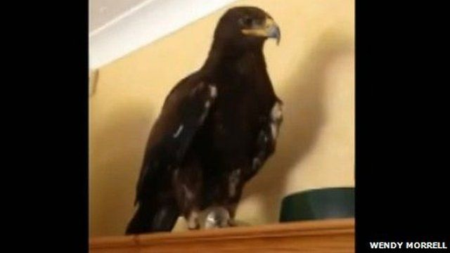 Storm, Russian Steppe Eagle