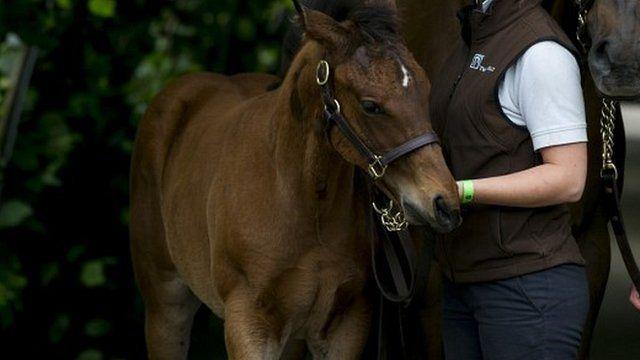 Frankel's foal