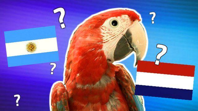Ronaldo the Newsround parrot