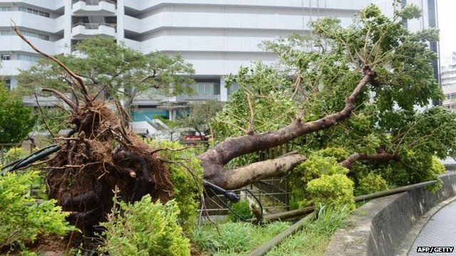 """A large tree uprooted on a pedestrian road in Naha, Japan""""s southern island of Okina"""