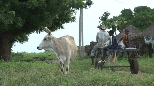 Rural scene with cow and villagers