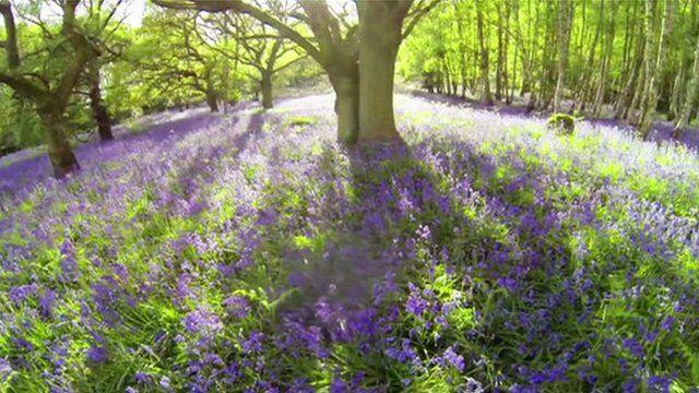 Woodland beauty spot