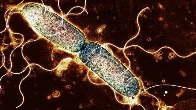 single bacterium dividing into two identical clones