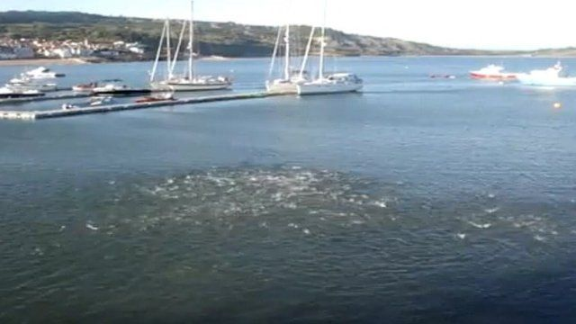 Whitebait jumping off Lyme Regis