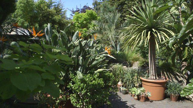 subtropical garden ideas gardens and planting gallery