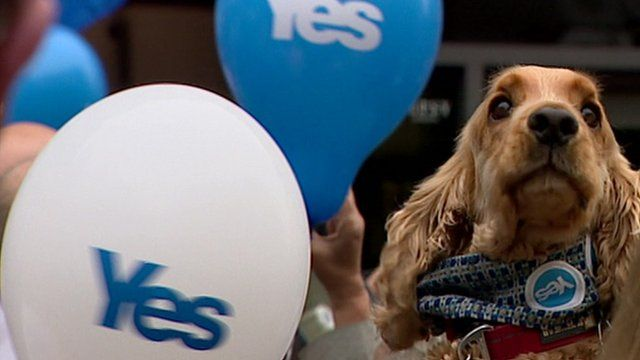 Dog at a Yes campaign rally