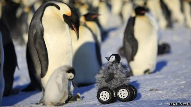 Rover camera disguised as a penguin chick (c) Le Maho et al