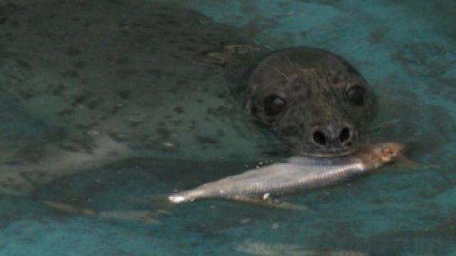 Seal at Mallydams Wood RSPCA Centre