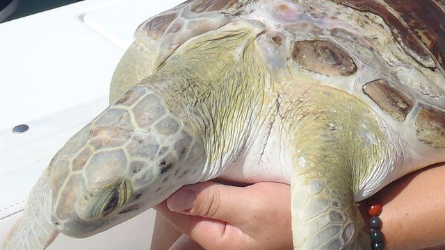 Izzy the turtle