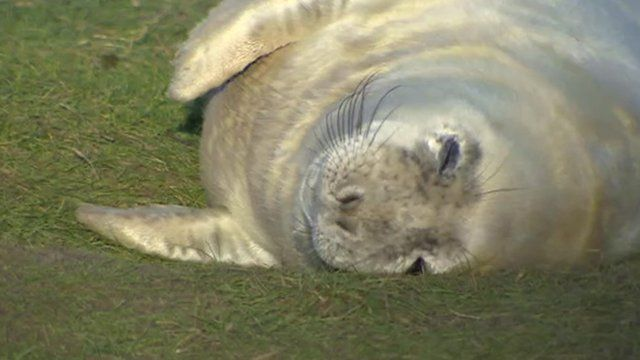Seal at Donna Nook sanctuary