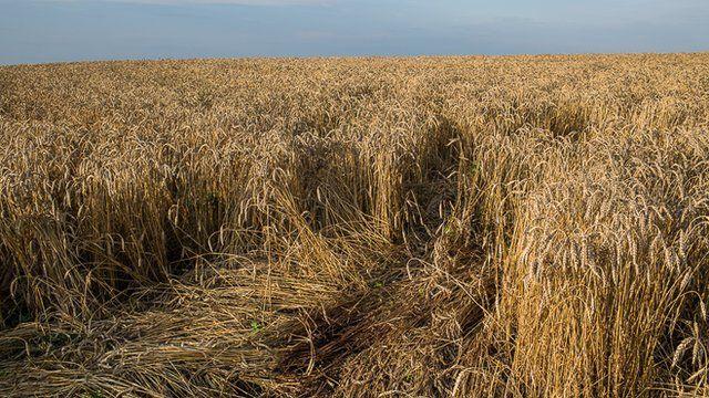 Site of MH17 plane crash in Ukraine
