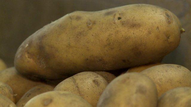 Salt potato