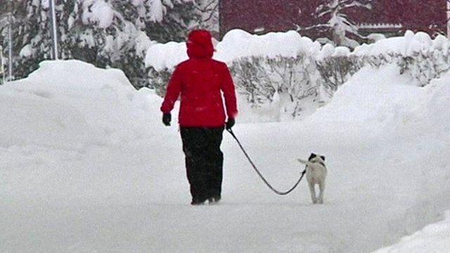 Dog walker in the snow in Sweden