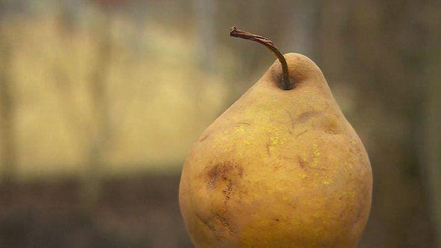 A Warden Pear