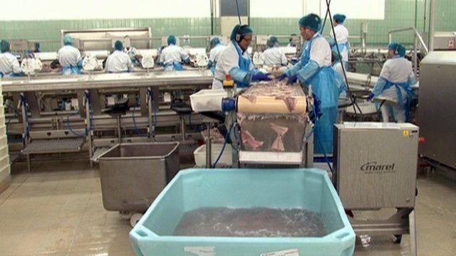 Fish processing factory