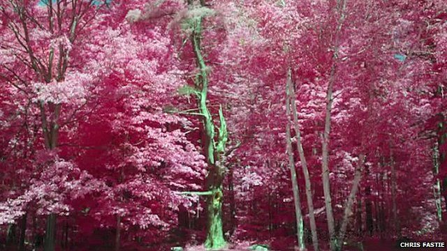 An infrared image of trees